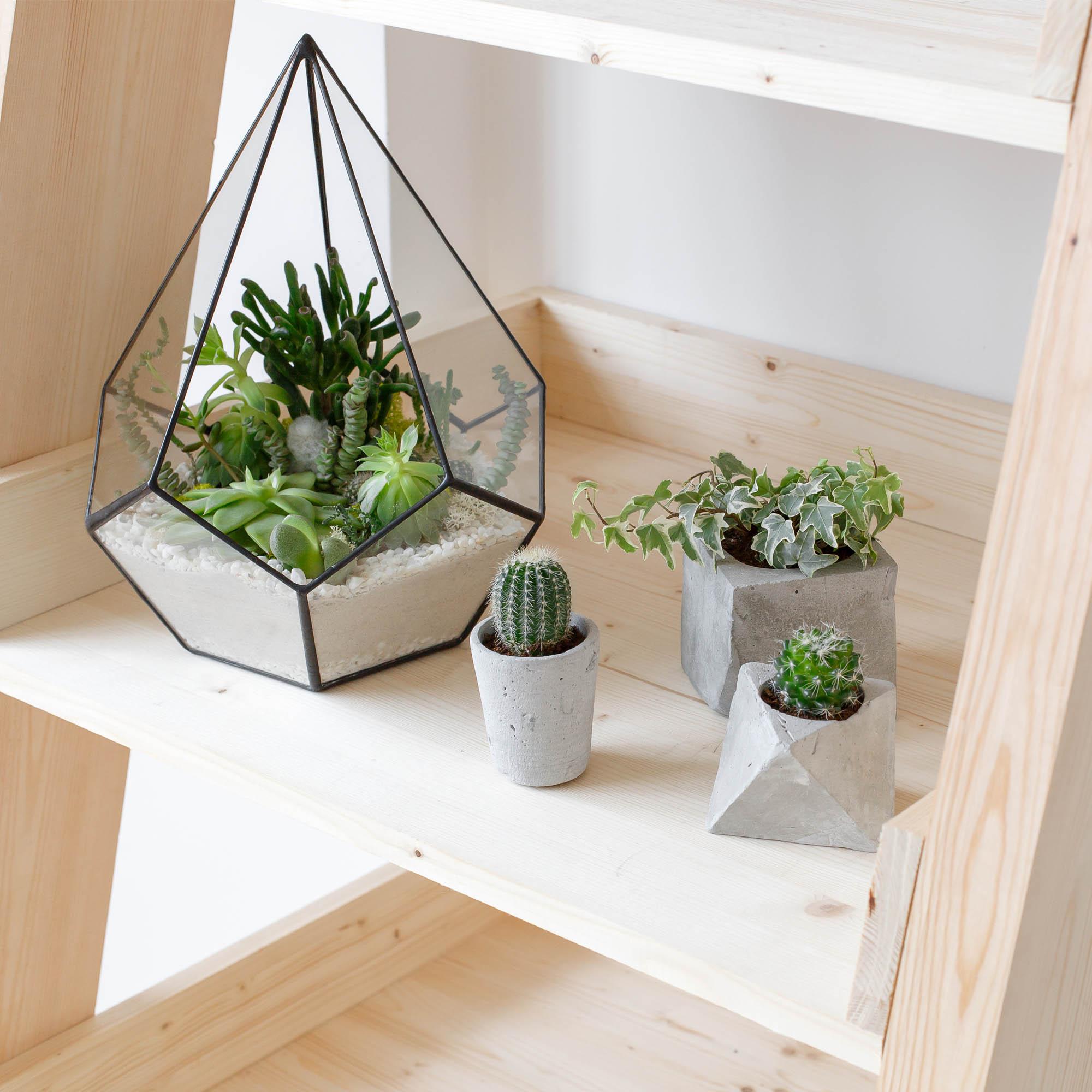 plantas-e-vasos
