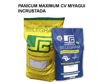 SEMENTES CAPIM MIYAGUI INCRUSTADA 10 KG - SELEGRAM - 481110 - Unitário