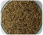 Braquiaria Brizatha - Brseeds - BRSEEDS - 1091 - Unitário