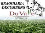 SEMENTE CAPIM DECUMBENS - 10KG - DuValle Sementes - 335010 - Unitário