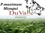 SEMENTE CAPIM MIYAGUI - 20KG - DuValle Sementes - 453520 - Unitário